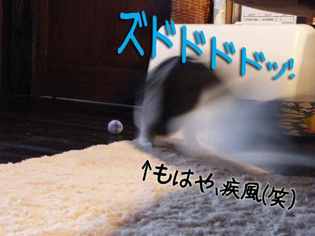 DSCF1622のコピー.jpg