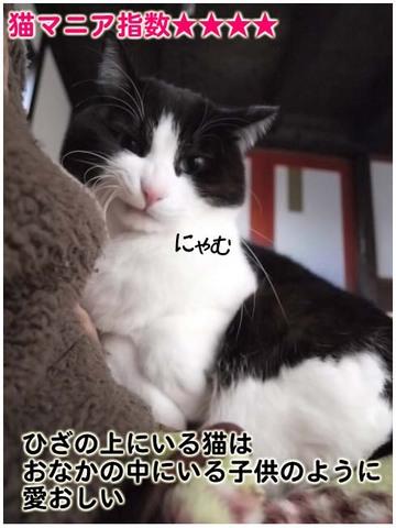 猫マニア指数.jpg