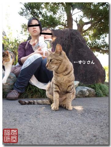 猫寺3.jpg