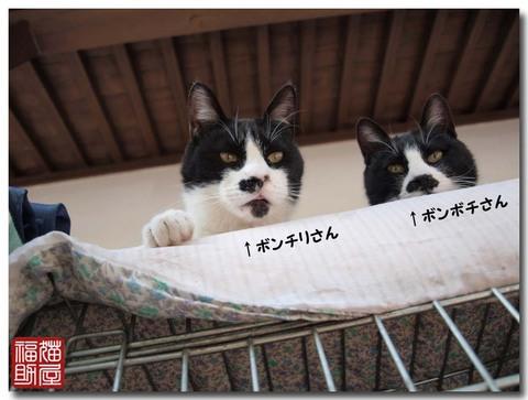 猫寺6.jpg